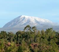 Kilimanjaro - Lemosho Climb (Exclusive) Tours 2020 - 2021 -  Alpine Desert