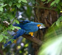 Machu Picchu & Amazon Cruise Exclusive Tours 2019 - 2020 -  Macaw