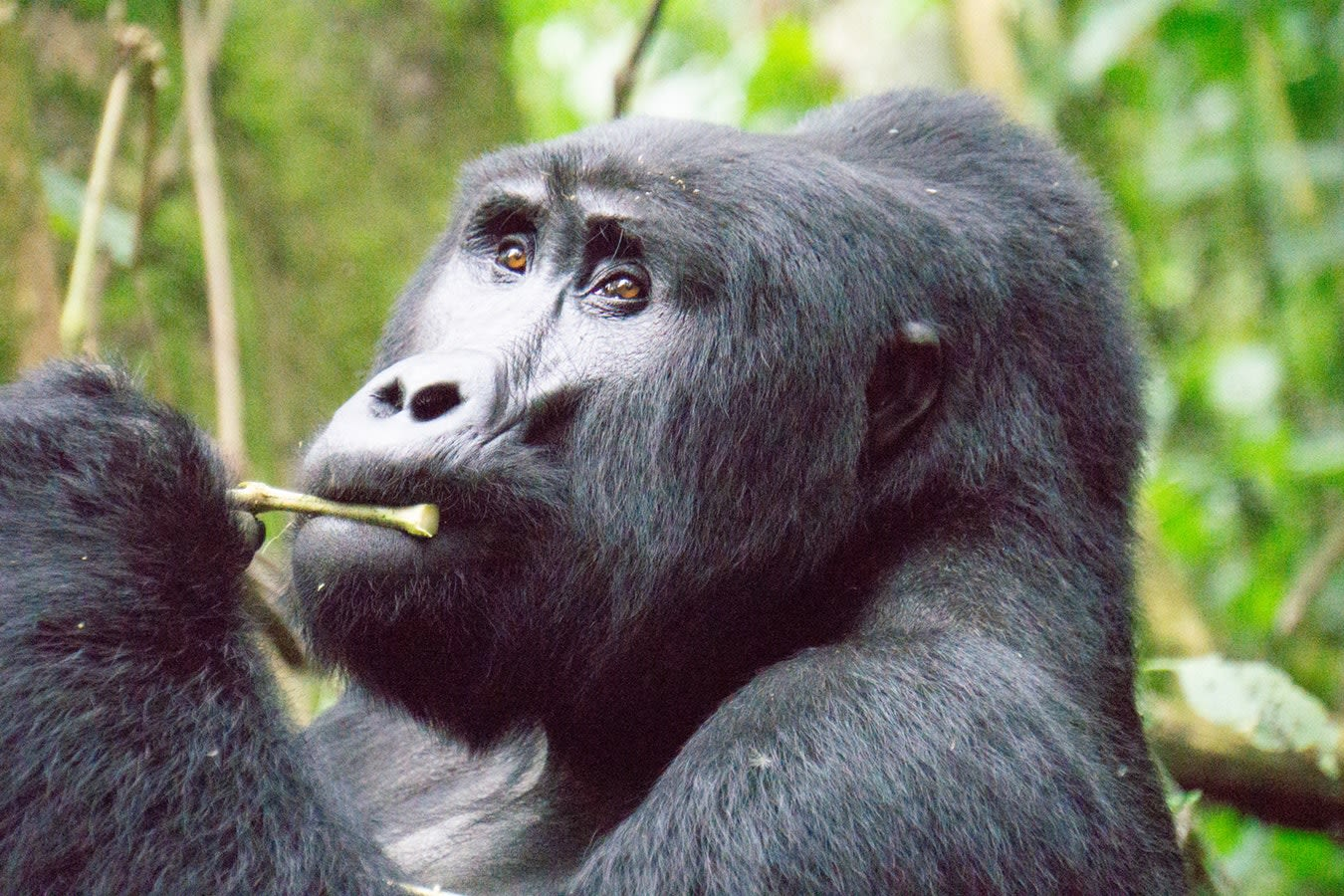 Uganda Highlights Tours 2019 - 2020 -