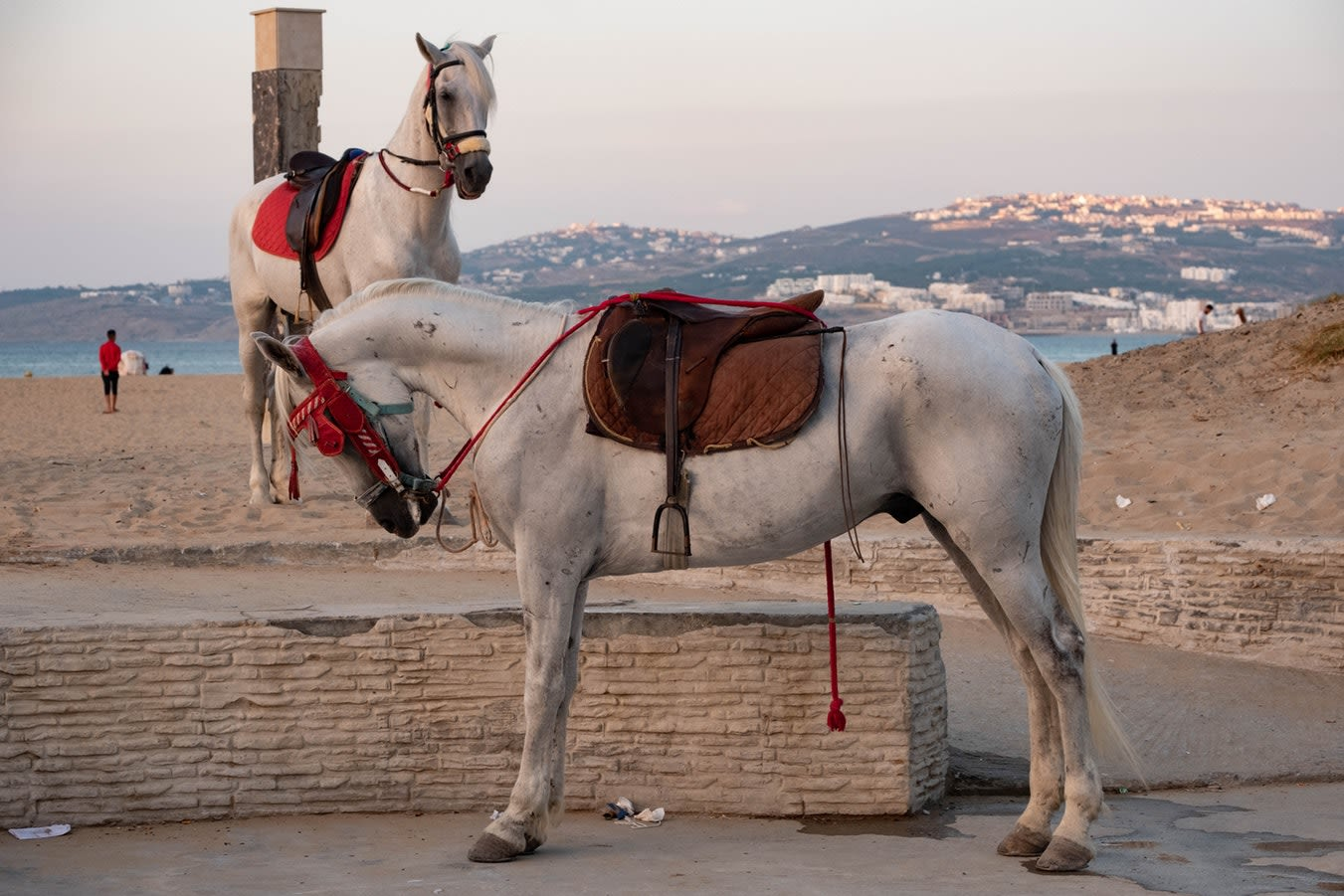 Southern Spain and Morocco Highlights Tours 2019 - 2020 -  Two white horses on the beach of Tangier