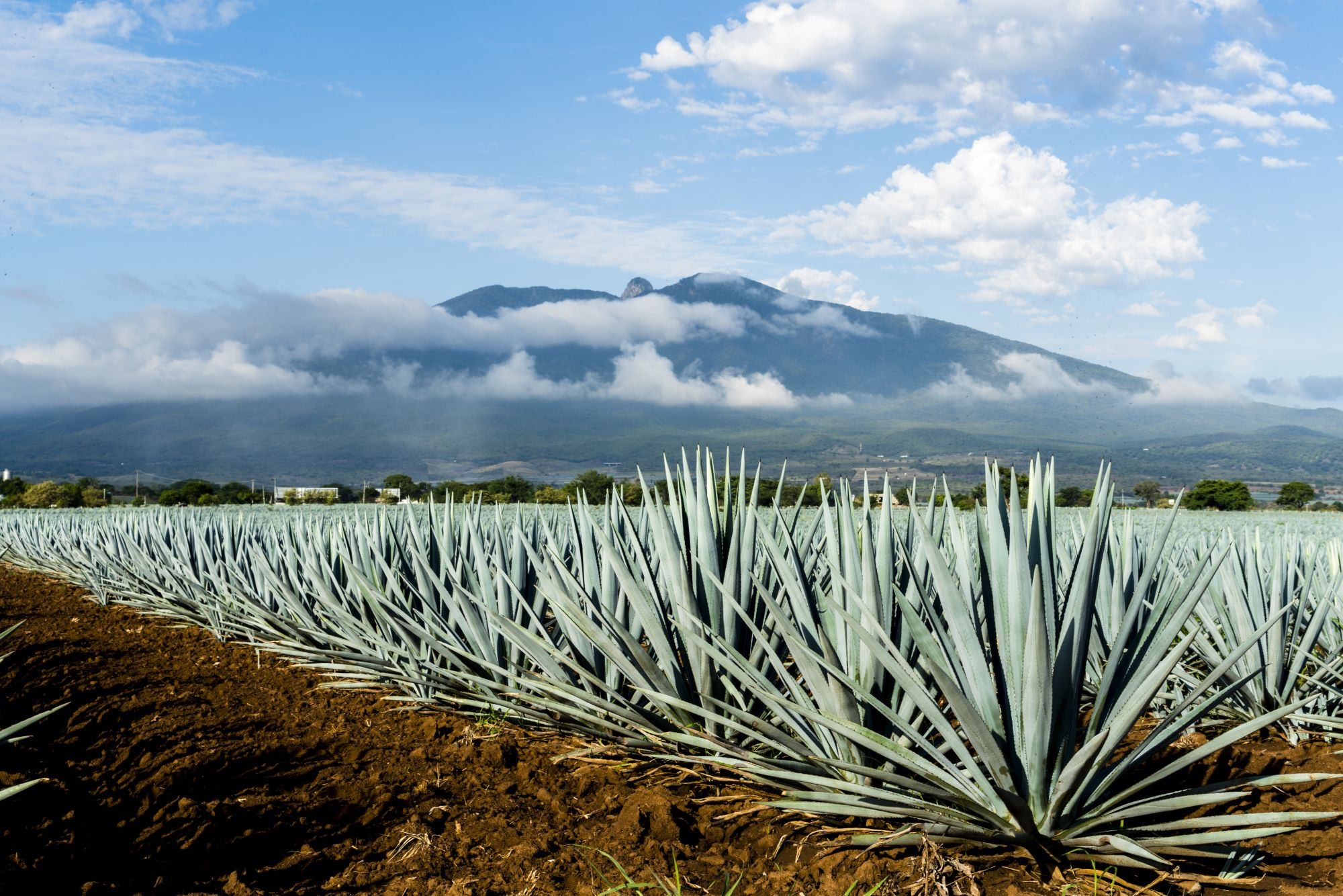 Taste of Mexico: Food, Wine & Tequila Tours 2019 - 2020 -  tequila plant