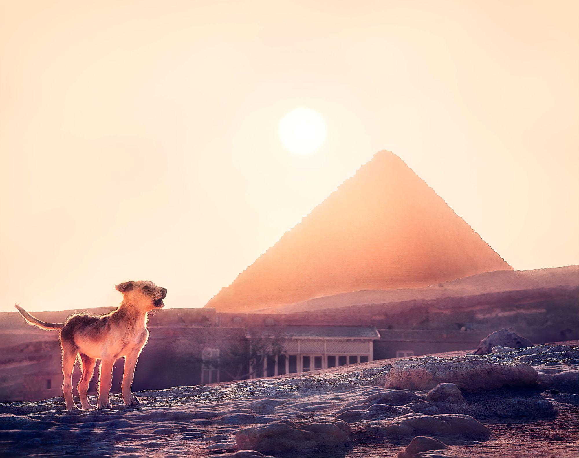 Egypt & Jordan Exclusive Tours 2019 - 2020 -  Sunset at Pyramids