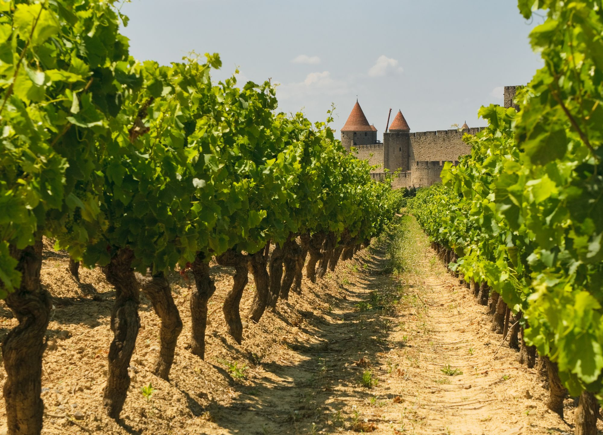 Munich, Salzburg & Vienna Discovery Tours 2019 - 2020 -  vineyard landscape of vineyards in medieval town of carcassonne