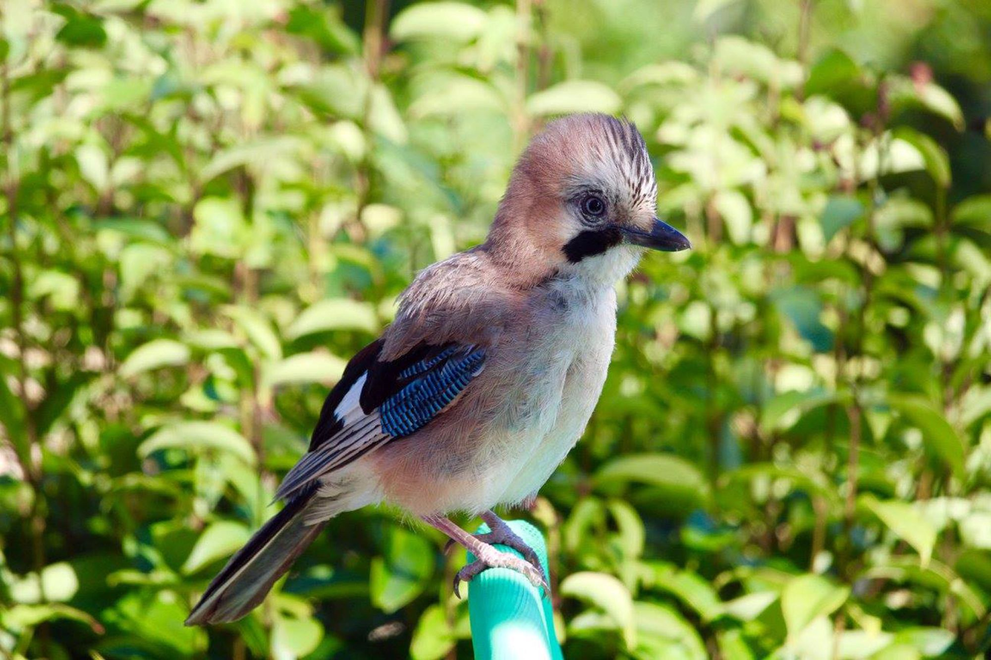 Romance of Venice & Croatia Tours 2019 - 2020 -  BlueJay bird