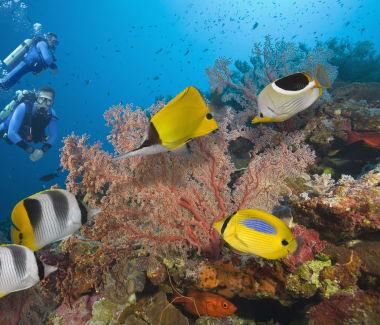Coral Coast diving