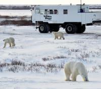 Great Polar Bear Adventure Tours 2020 - 2021 -  Tundra Buggy™