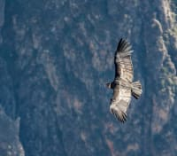 Fjords, Glaciers & Penguins by Land and Sea Tours 2020 - 2021 -  Andean Condor