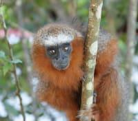 Quintessential Peru Tours 2020 - 2021 -  Amazon Monkey