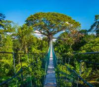 Amazon Lodge & Machu Picchu Highlights Tours 2019 - 2020 -  Amazon Canopy Walkway
