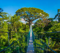 Quintessential Peru Tours 2020 - 2021 -  Amazon Canopy Walkway