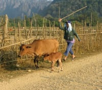 Laos Signature Tours 2020 - 2021 -  Vang Vieng Farm