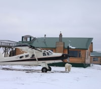 Great Polar Bear Adventure Tours 2020 - 2021 -  Dymond Lake Ecolodge
