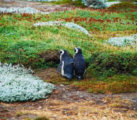 Fjords, Glaciers & Penguins by Land and Sea Tours 2020 - 2021 -  Magellanic Penguins on Magdalena Island