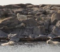 Arctic Summer Adventure Tours 2020 - 2021 -  Polar Bears