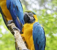 Costa Rica Highlights Tours 2019 - 2020 -  Macaw