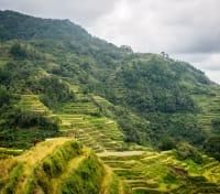 Philippines Signature: Rice Terraces & Chocolate Hills Tours 2019 - 2020 -  Banaue