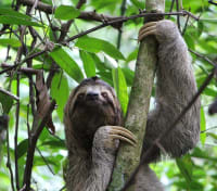 Cloudforest and Caribbean Islands Tours 2020 - 2021 -  Sloth