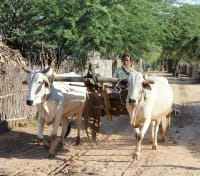 Myanmar Temples & Irrawaddy Cruise Tours 2019 - 2020 -  Local Farmer